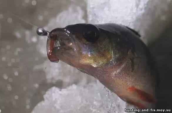 Форум зимняя рыбалка с эхолотом